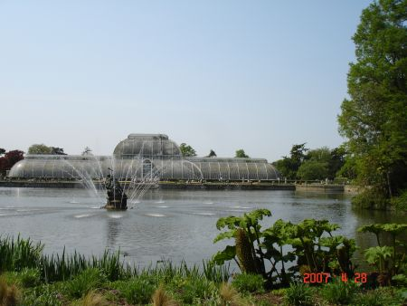 The Hot and Humid Palm House