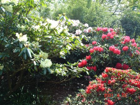 The Reason Why Rhododendrons Exist